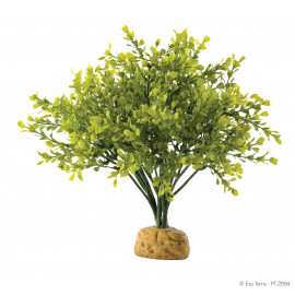 Растение ExoTerra Boxwood Bush